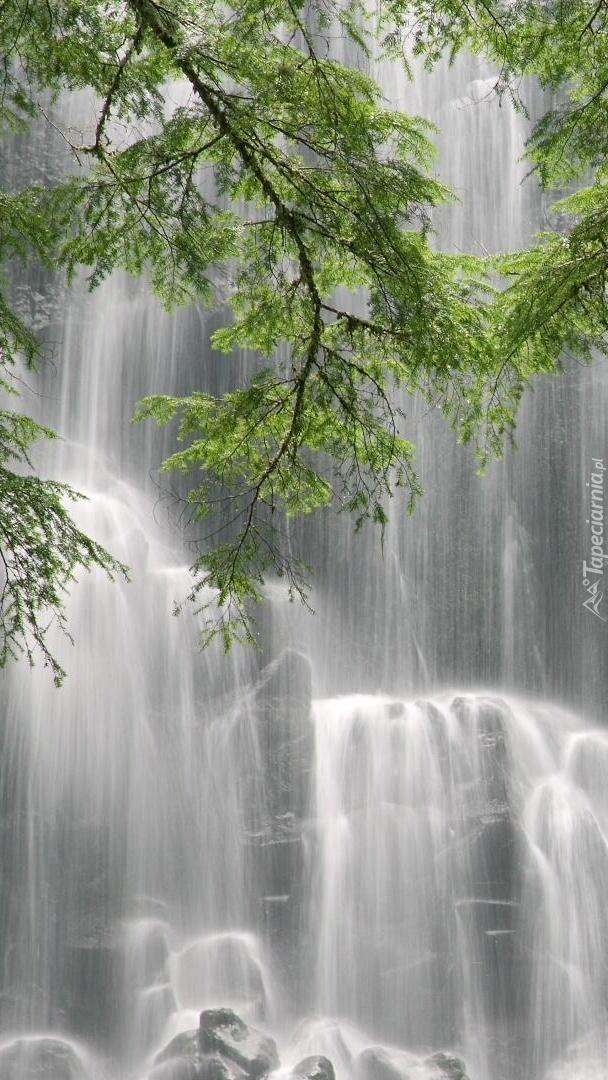 Gałęzie na tle wodospadu