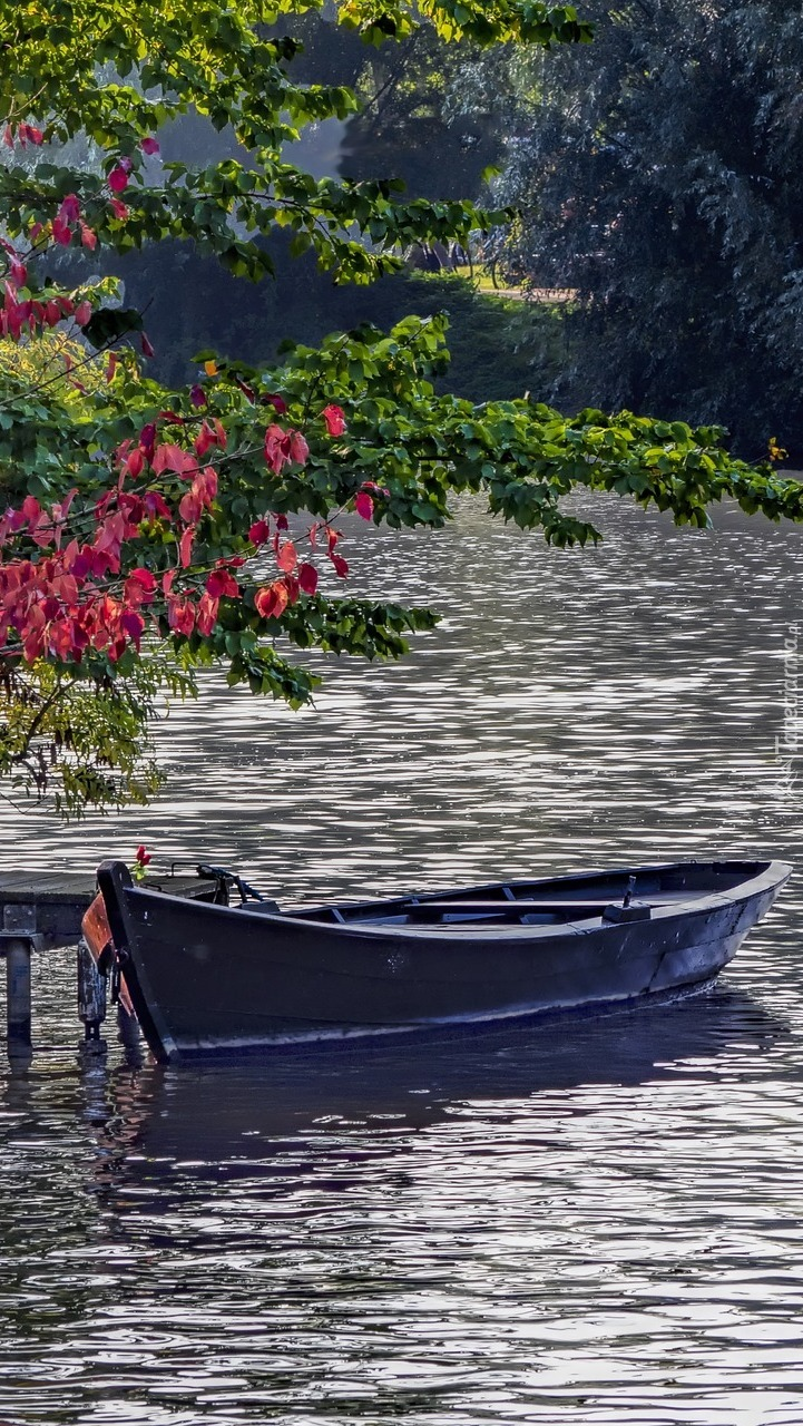 Gałęzie nad łódką