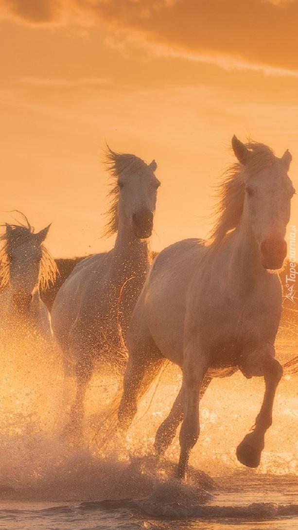 Galopujące konie nad morzem