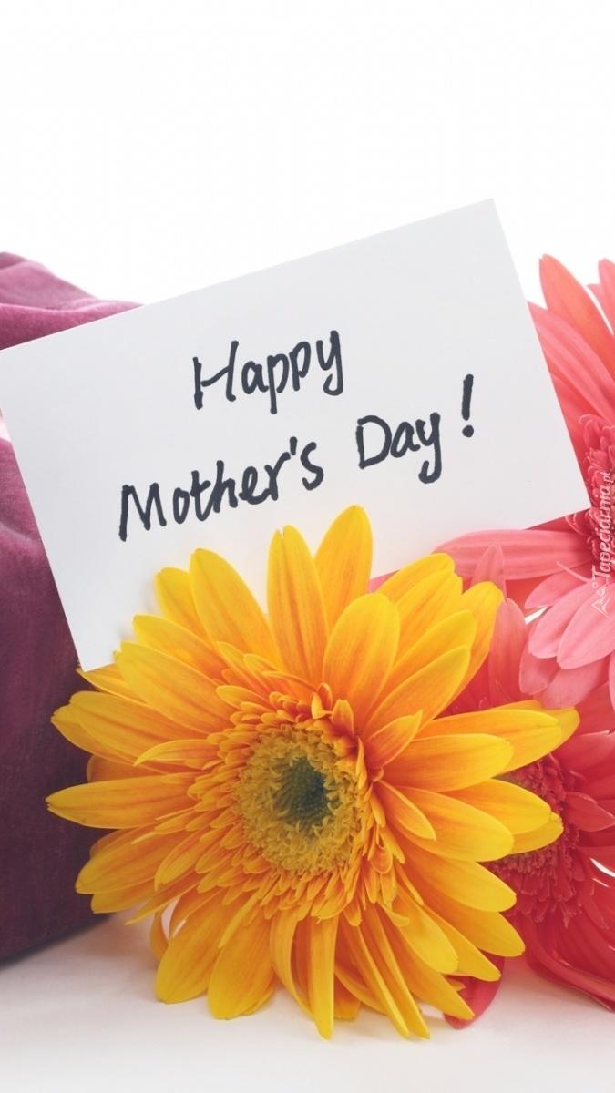 Gerbera na Dzień Matki