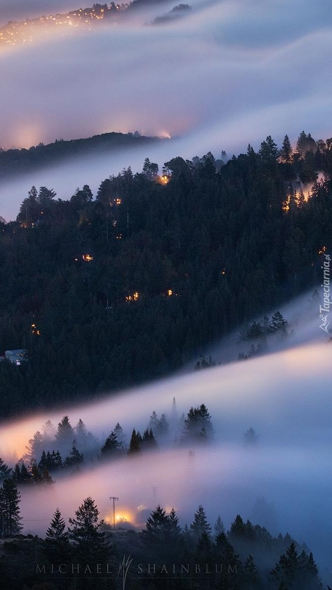 Gęsta mgła nad lasem