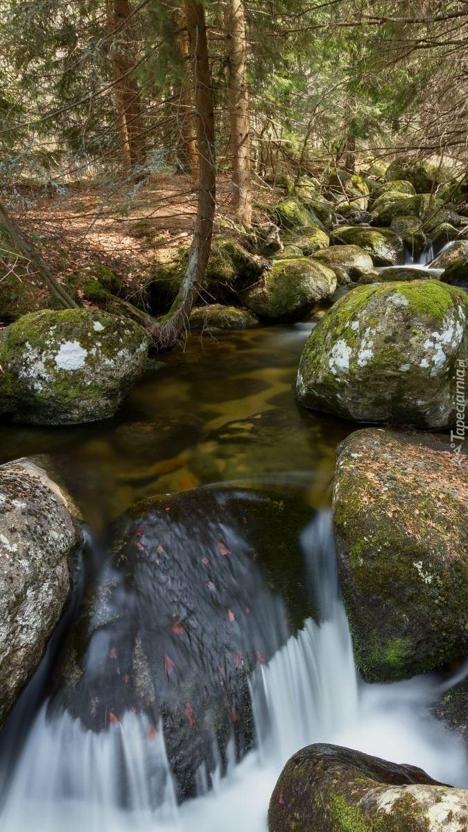Głazy w leśnej rzece