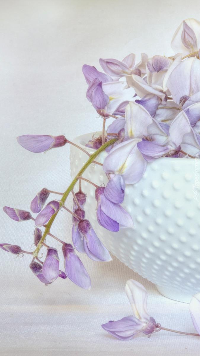 Glicynia w wazie