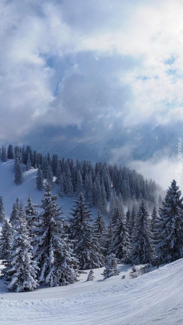 Górska dolina z ośnieżonymi świerkami