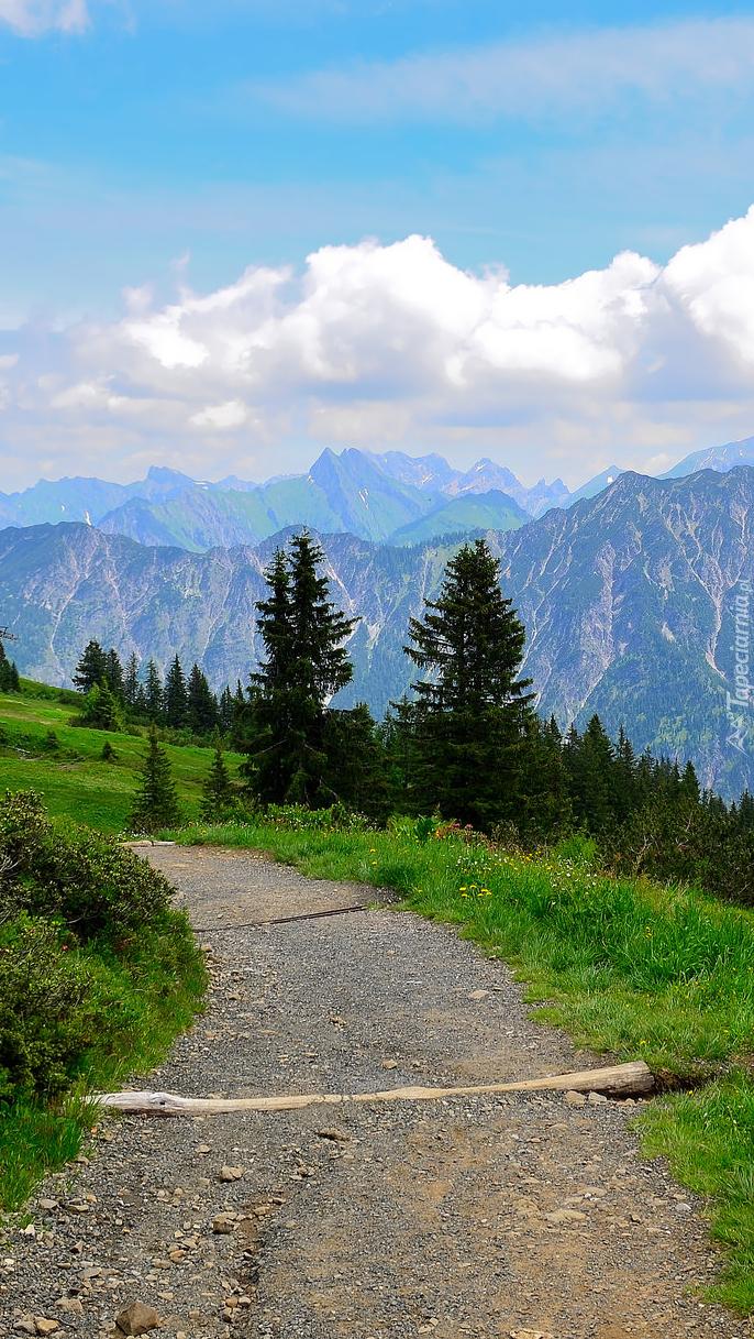 Górska droga przez łąkę