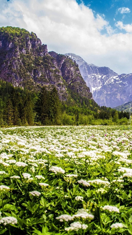 Górska łąka