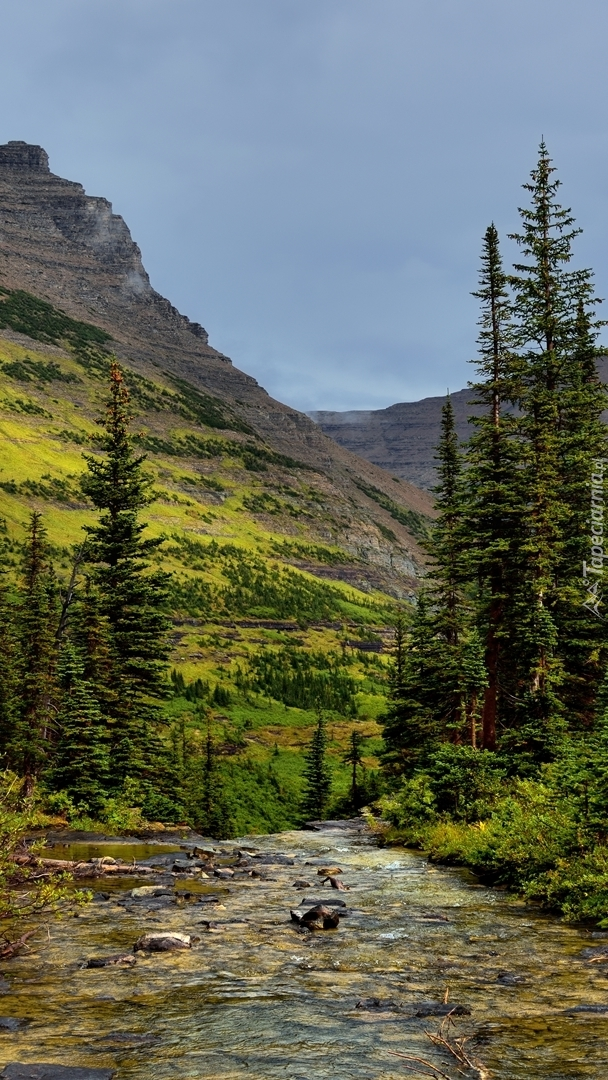 Górska leśna rzeka