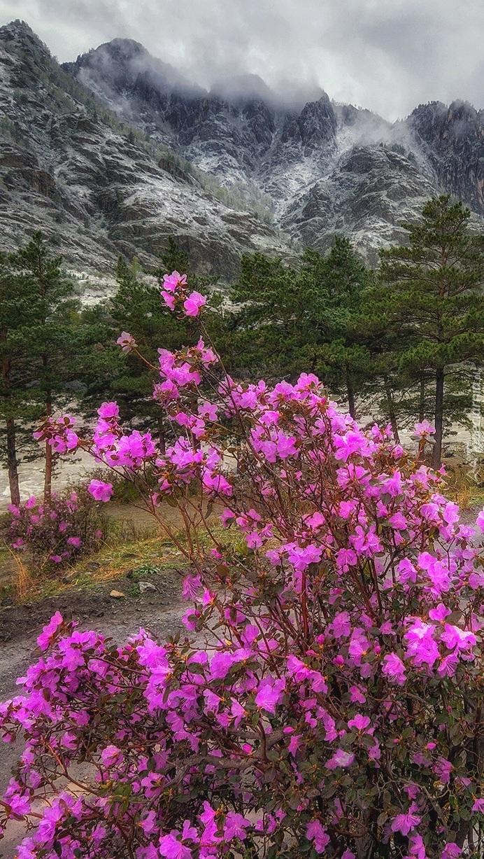 Góry Ałtaj w Rosji