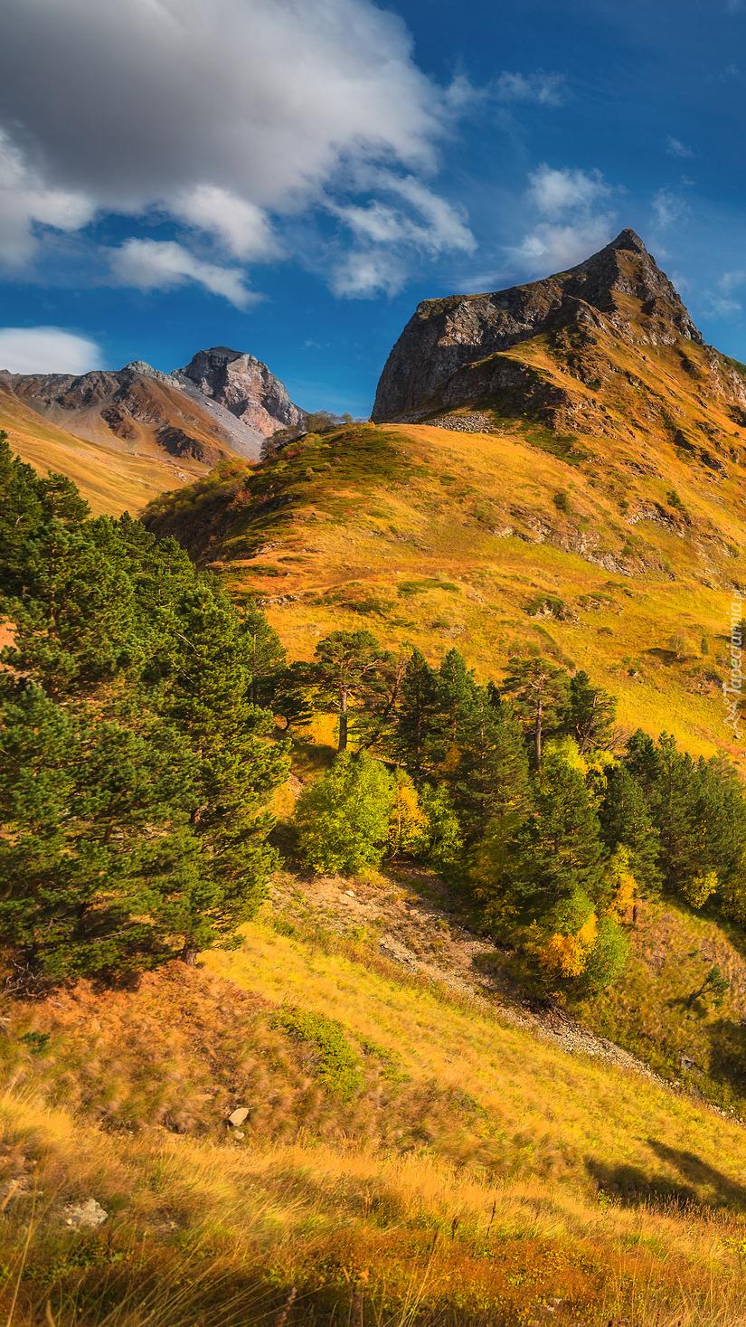 Góry i drzewa w słońcu