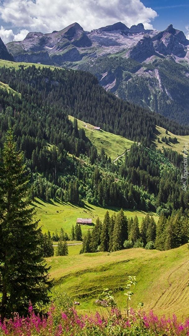 Góry i lasy w Alpach Szwajcarskich