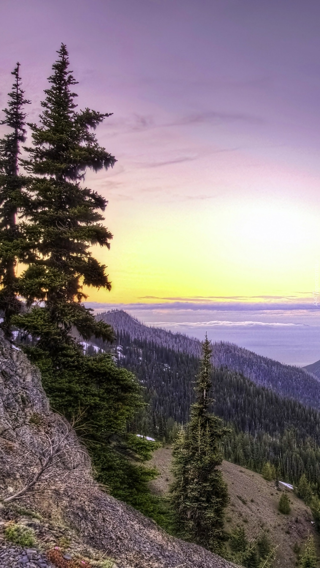 Góry i lasy w Parku Narodowym Olympic