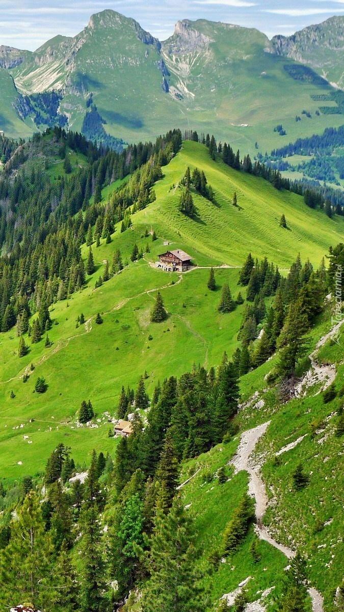 Góry i lasy w Szwajcarii