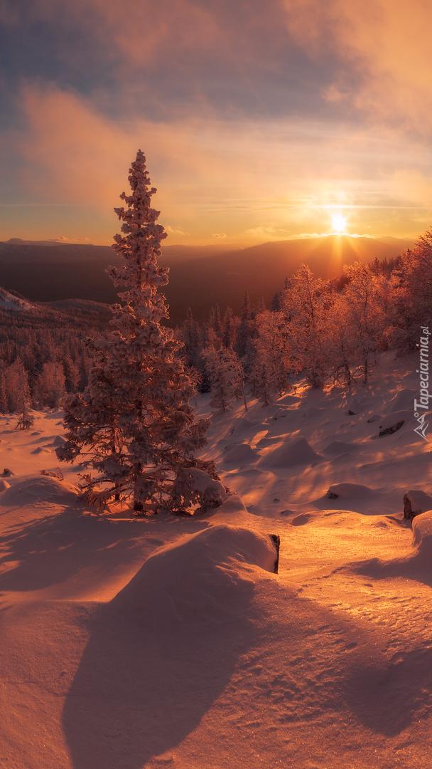 Góry i ośnieżone drzewa w porannym słońcu