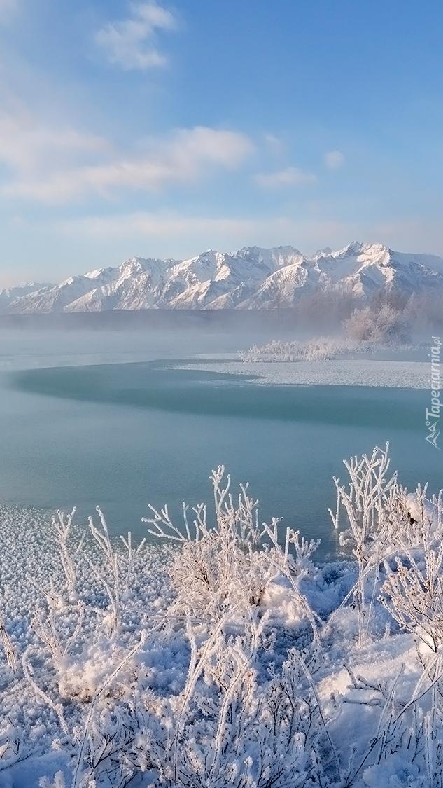 Góry i ośnieżone rośliny nad jeziorem
