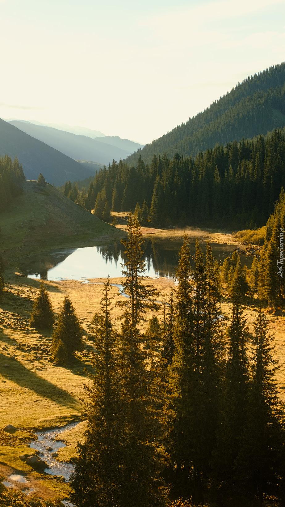 Góry i świerki nad jeziorkiem
