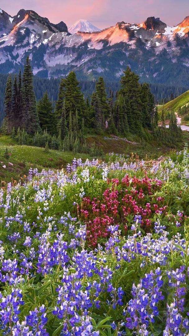 Góry Kaskadowe w Parku Narodowym Mount Rainier