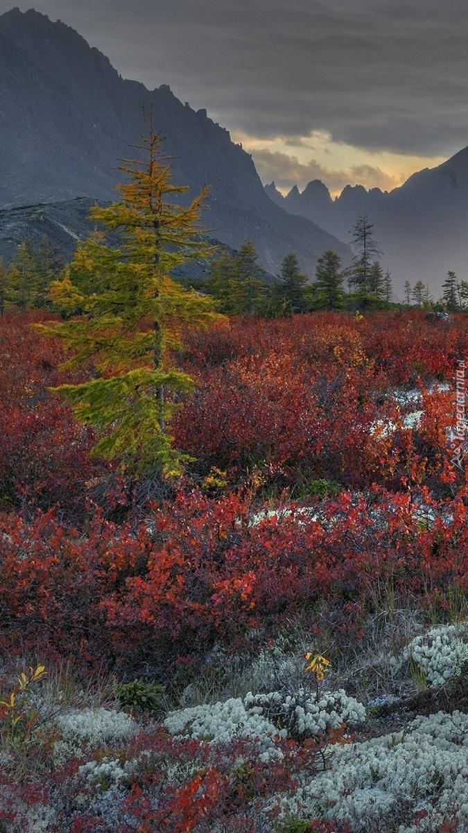 Góry Kołymskie i kolorowa roślinność