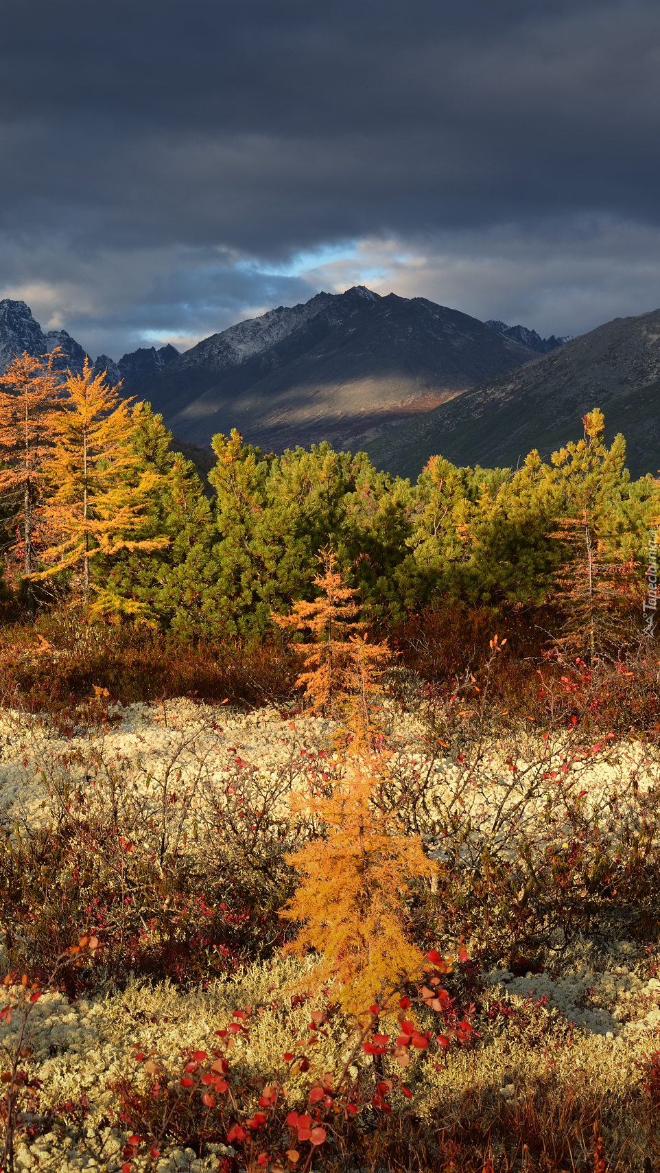 Góry Kołymskie jesienią