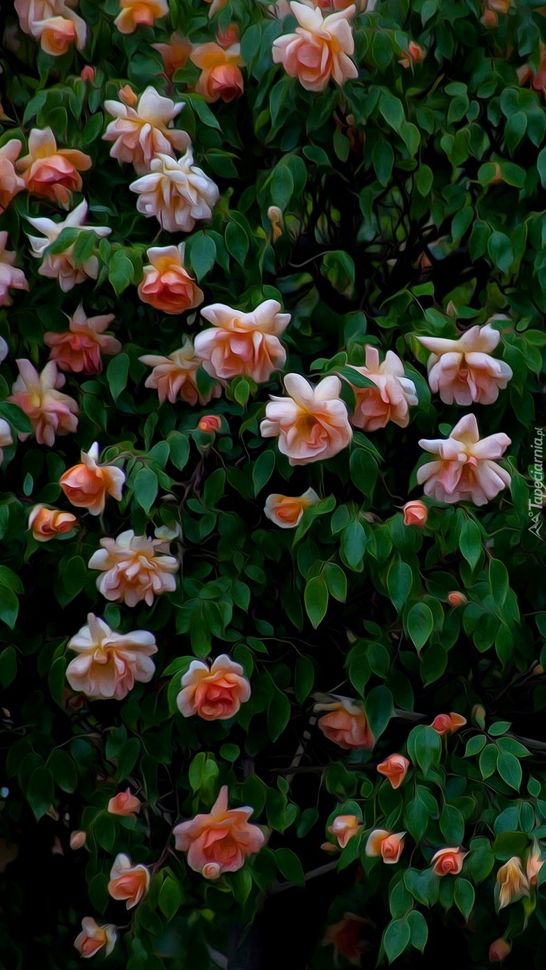 Graficzny krzew różany