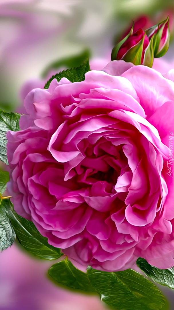 Grafika róży z pąkami