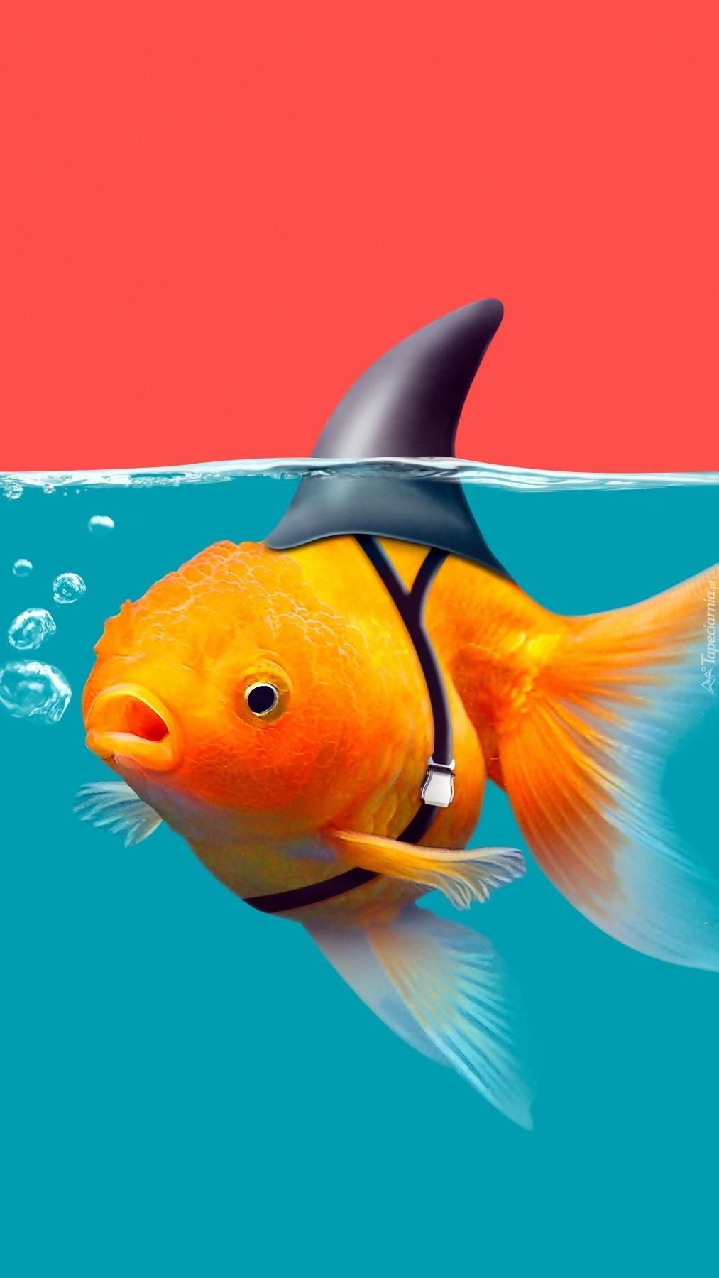 Grafika złotej rybki udającej rekina