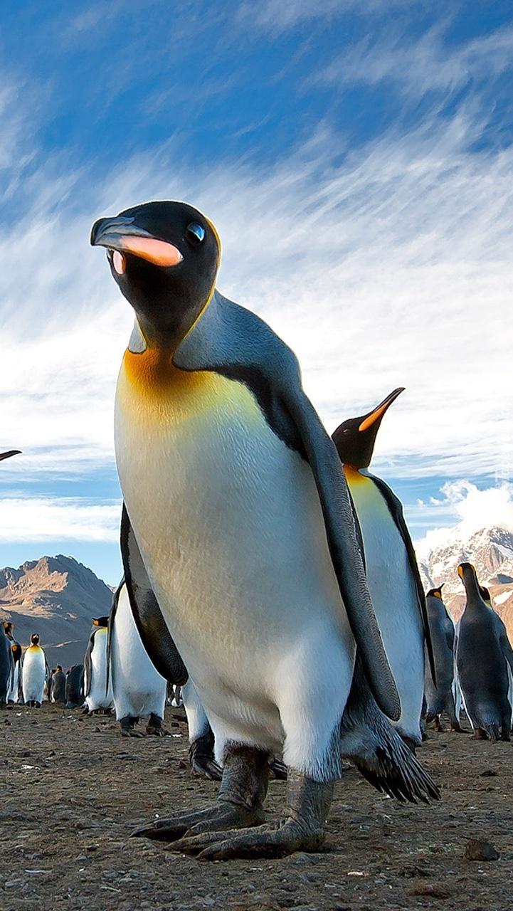 Gromada pingwinów w górach