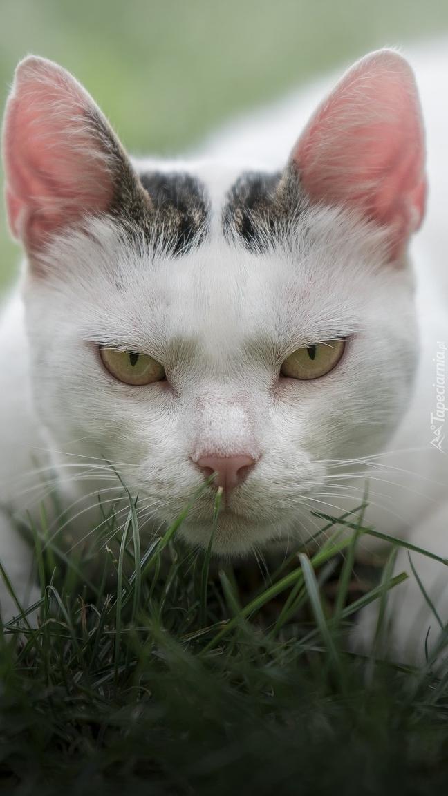 Groźne spojrzenie kota