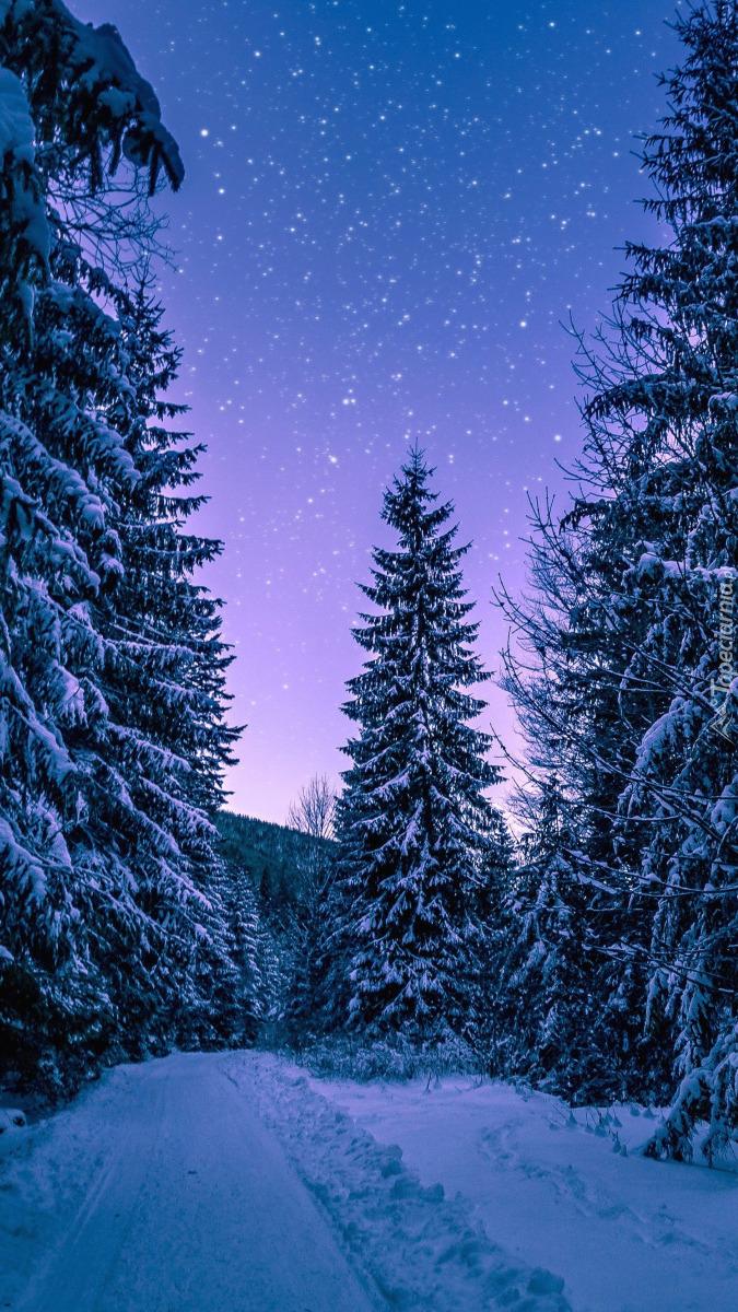 Gwiazdy nad zimowym lasem
