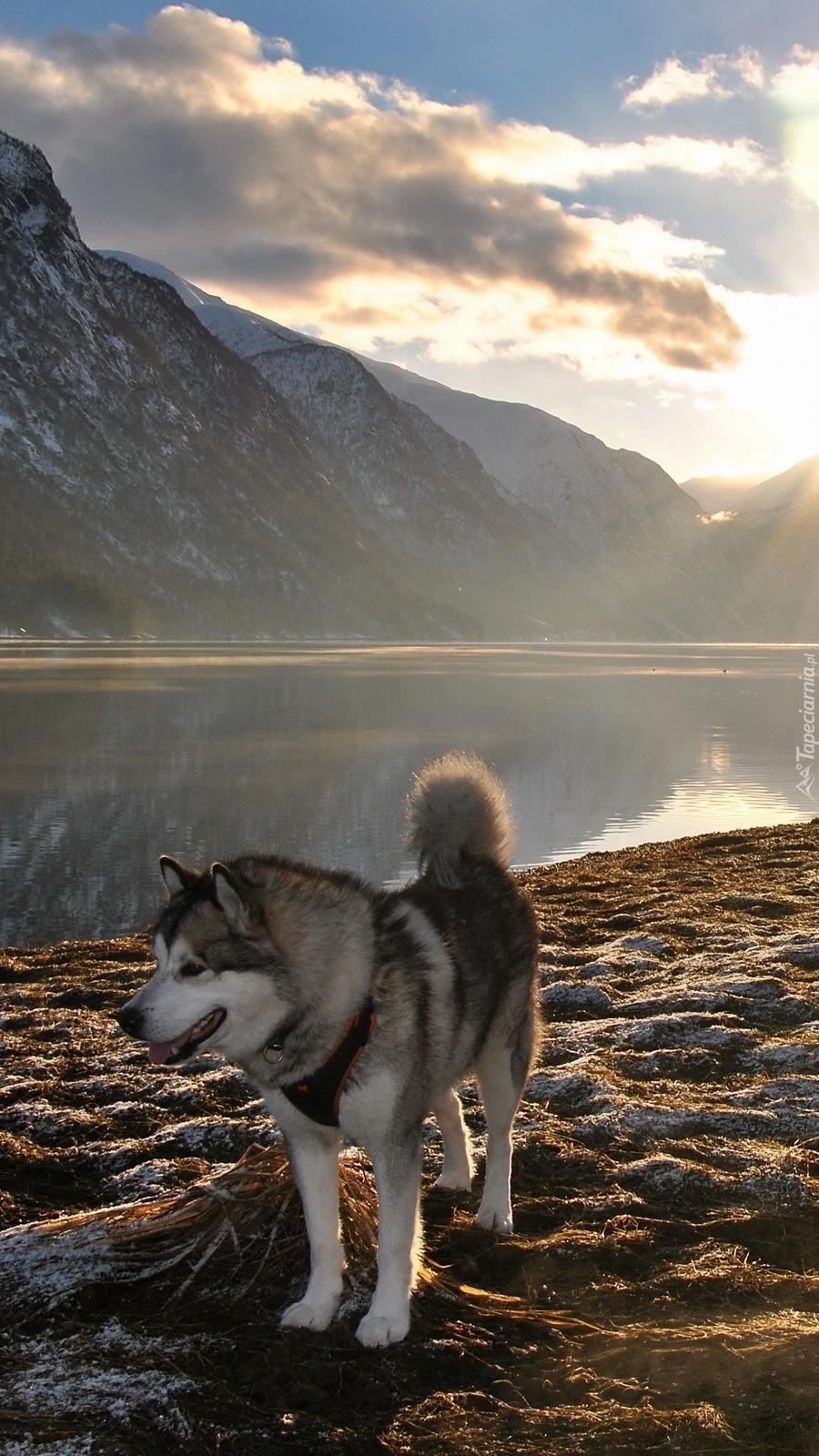 Husky nad jeziorem w górach