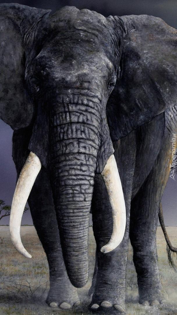 Idzie słoń