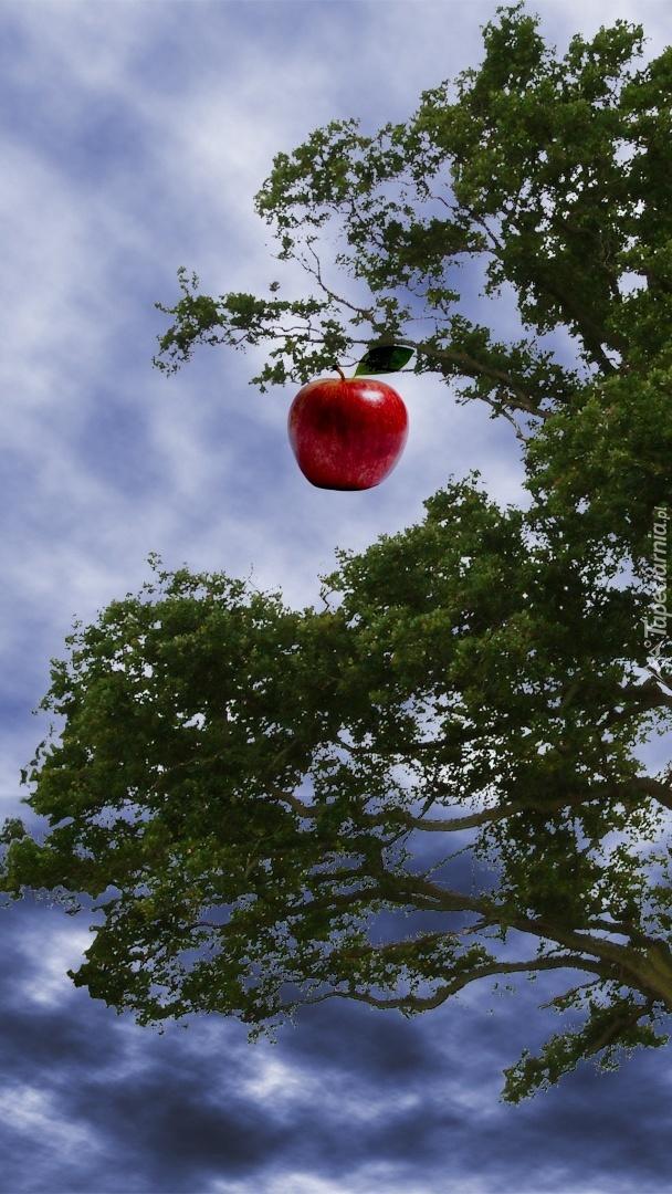Jabłko na gałązce