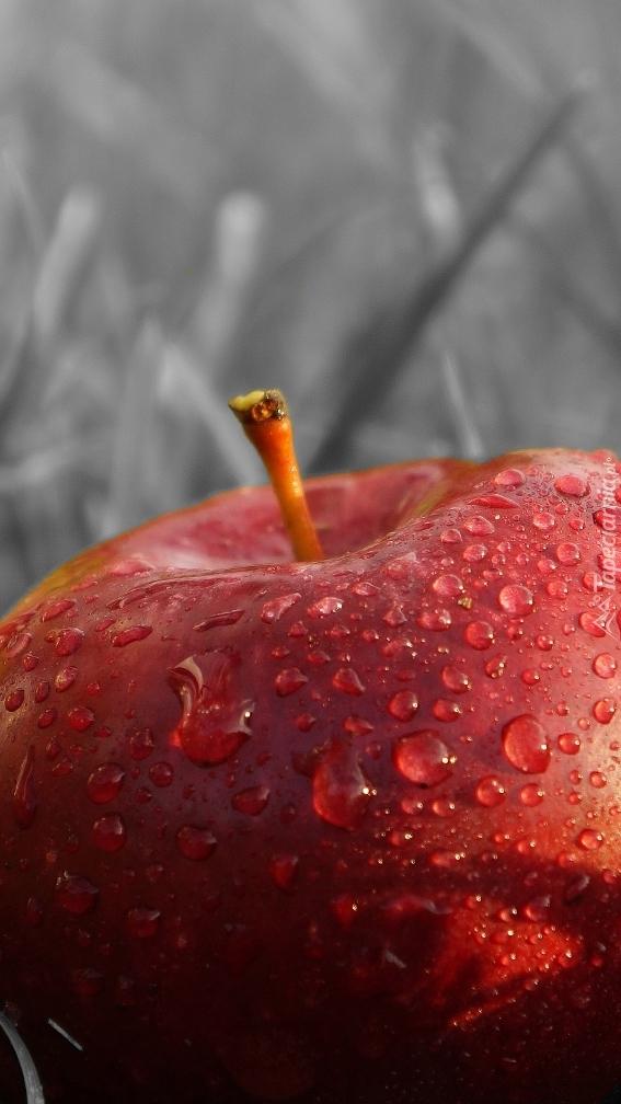 Jabłko w trawie w kroplach rosy
