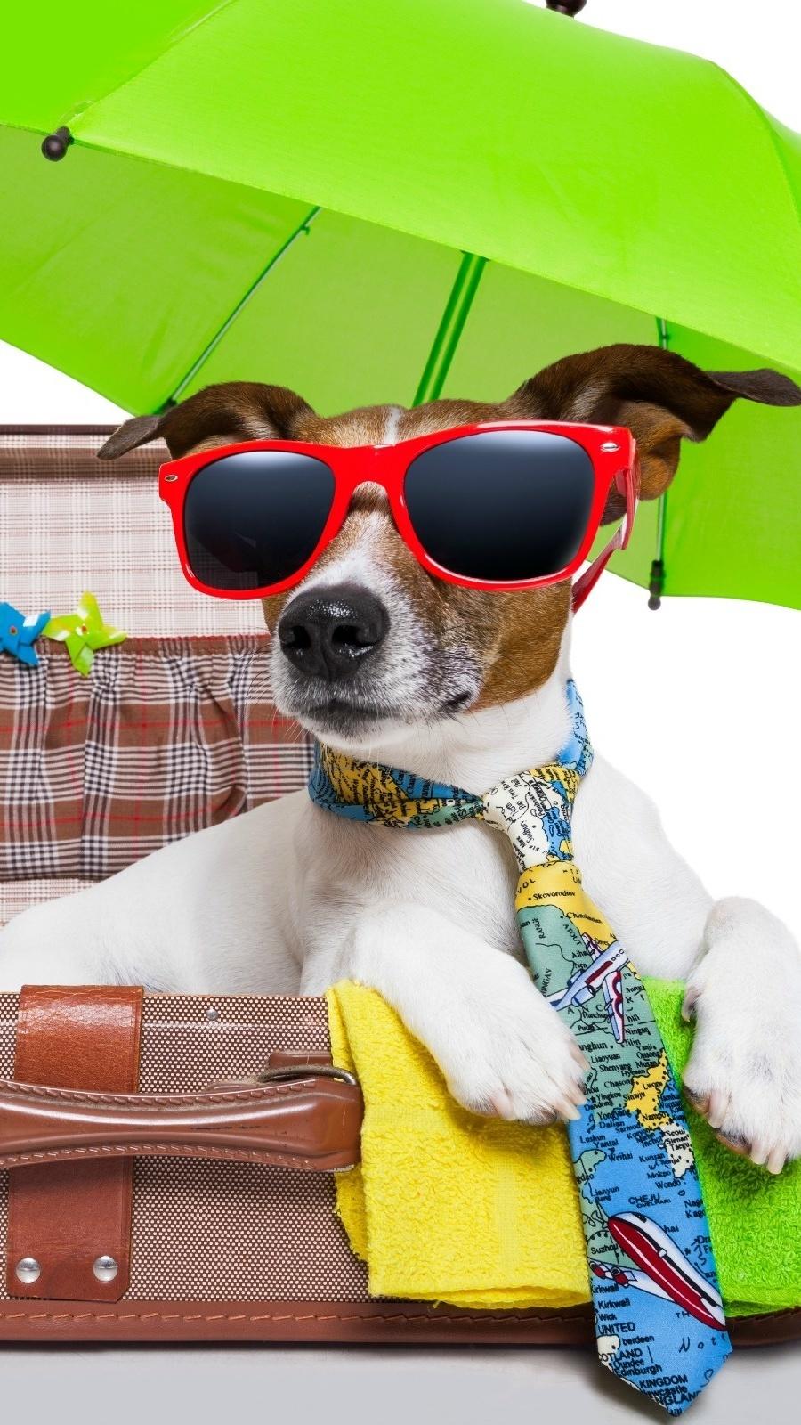 Jack Russell terrier na wakacjach
