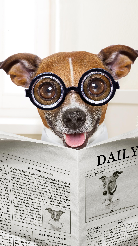 Jack Russell terrier w okularach z gazetą