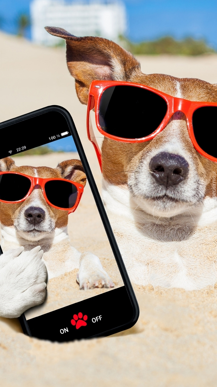Jack Russell terrier z telefonem na plaży