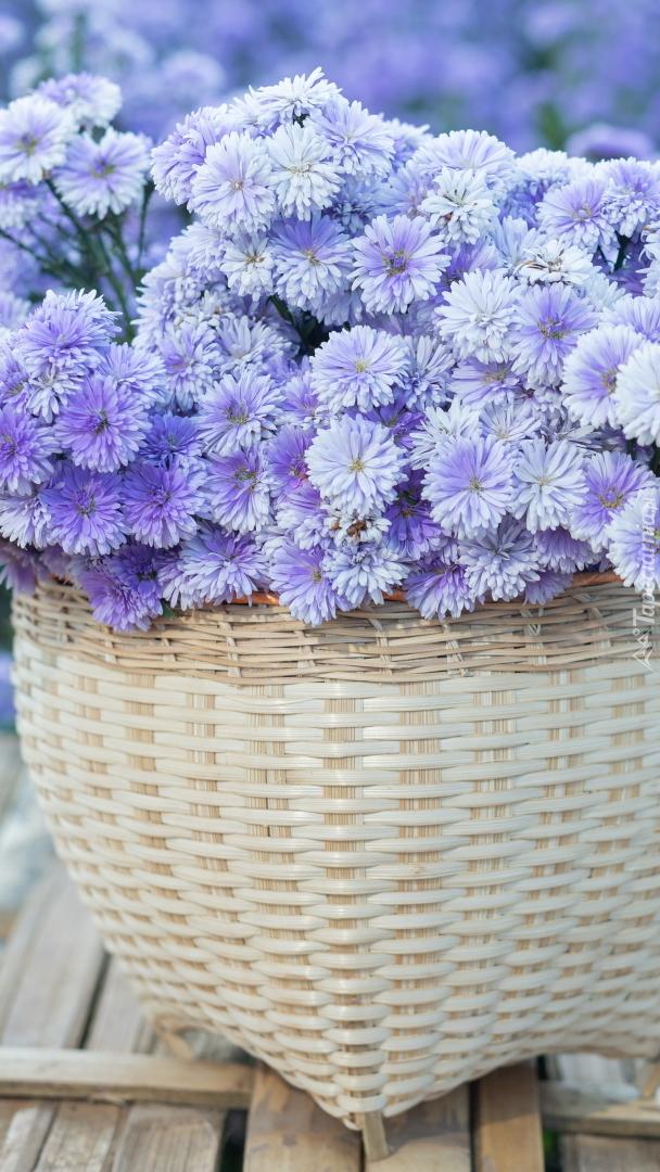 Jasnofioletowe drobne kwiatki w koszyku