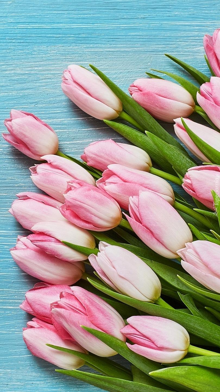 Jasnoróżowe tulipany