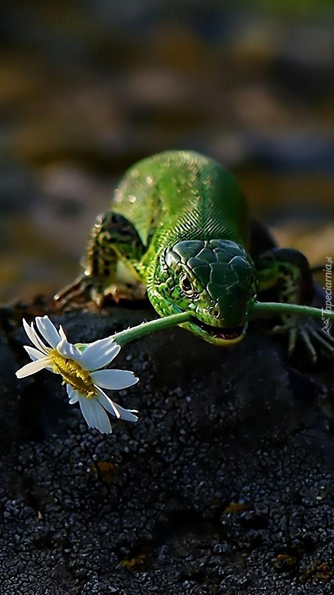 Jaszczurka z kwiatkiem