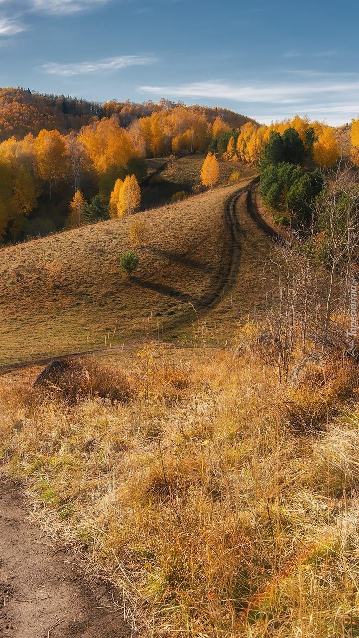 Jesień na ałtajskich wzgórzach