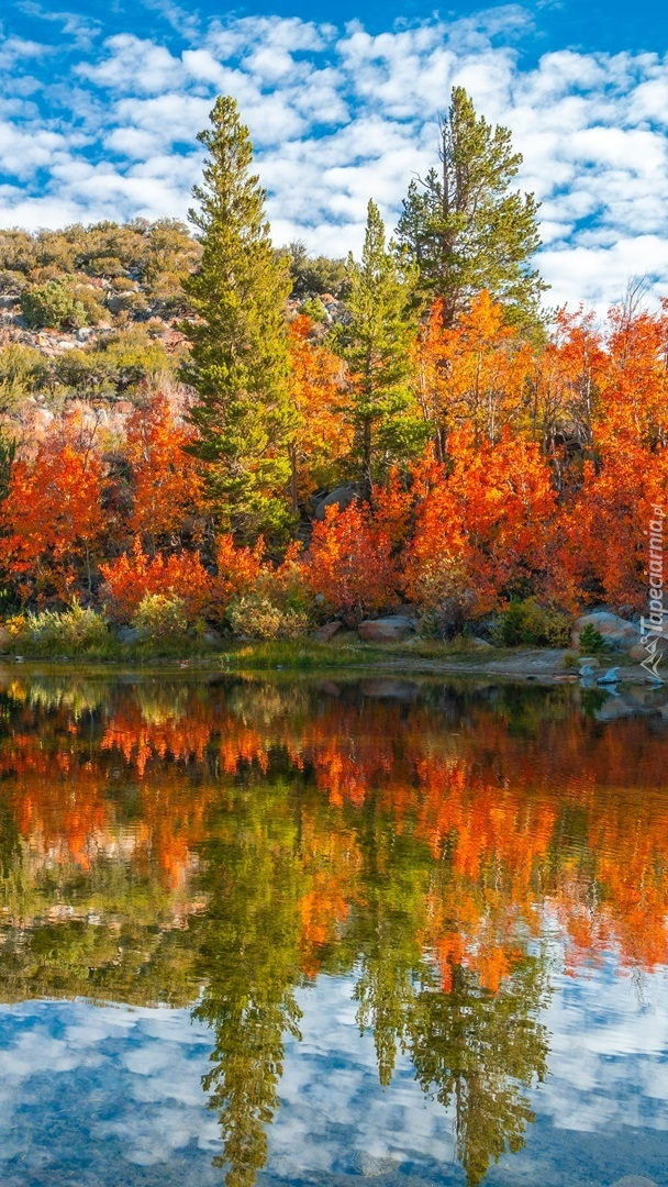 Jesień na rzeką Bishop Creek