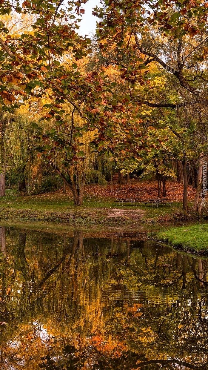 Jesień nad stawem w parku