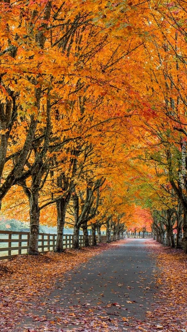 Jesienna aleja