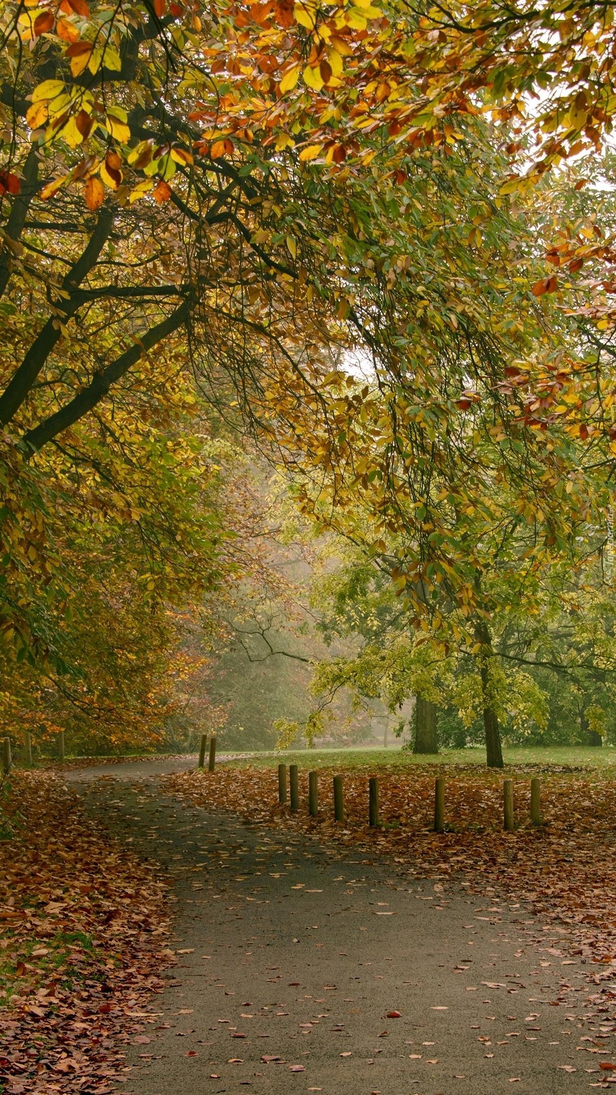 Jesienna alejka w parku