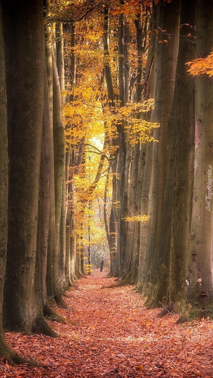 Jesienna droga w lesie