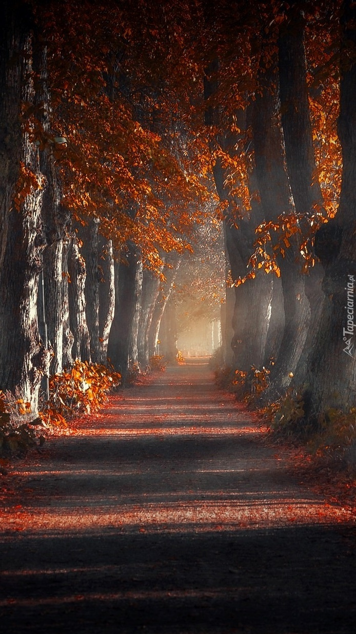 Jesienna droga we mgle