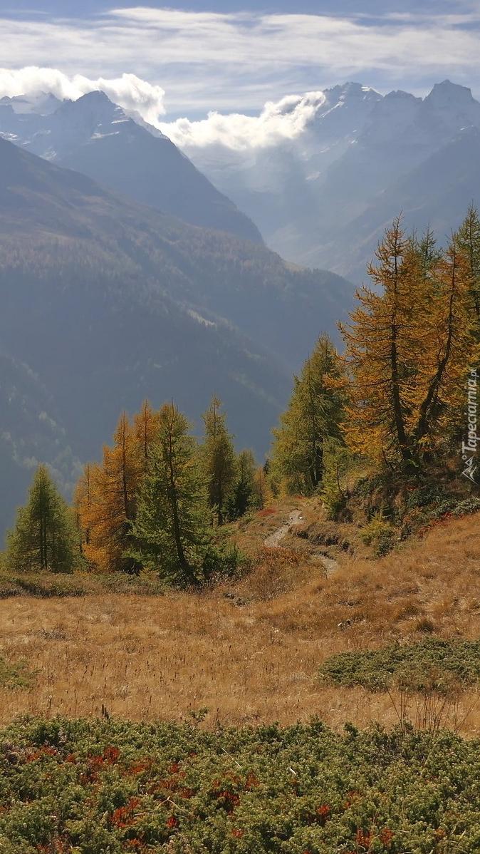 Jesienna polana w górach