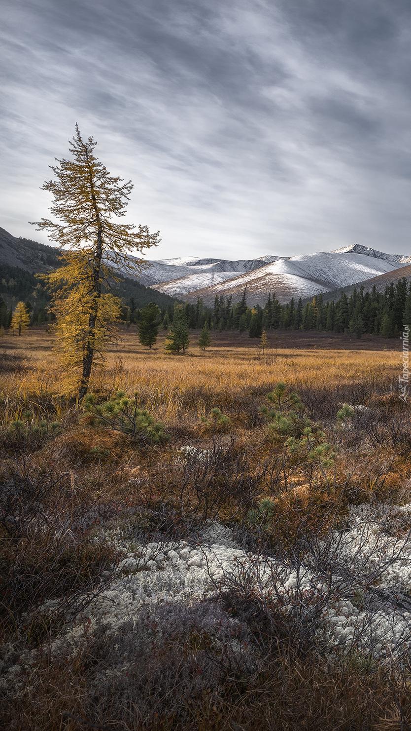 Jesienna roślinność na tle ośnieżonych gór