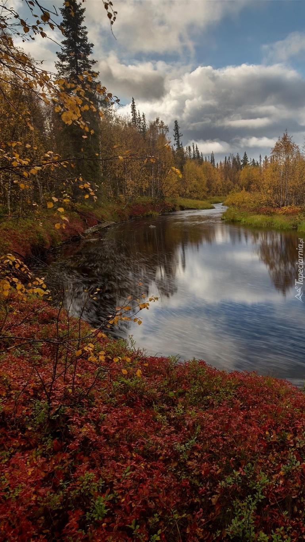 Jesienne drzewa i krzewy nad rzeką
