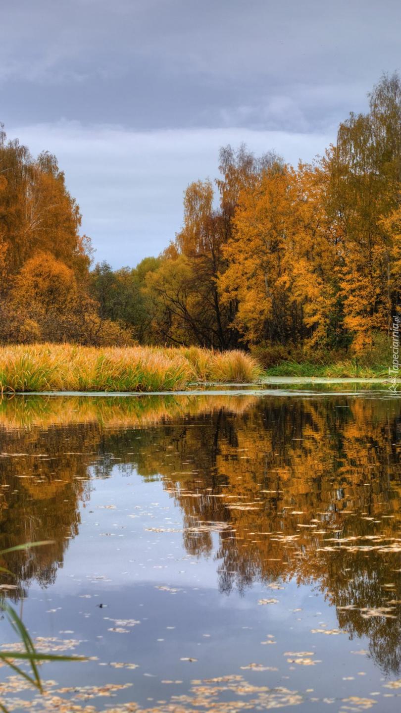 Jesienne drzewa i trawy nad jeziorem