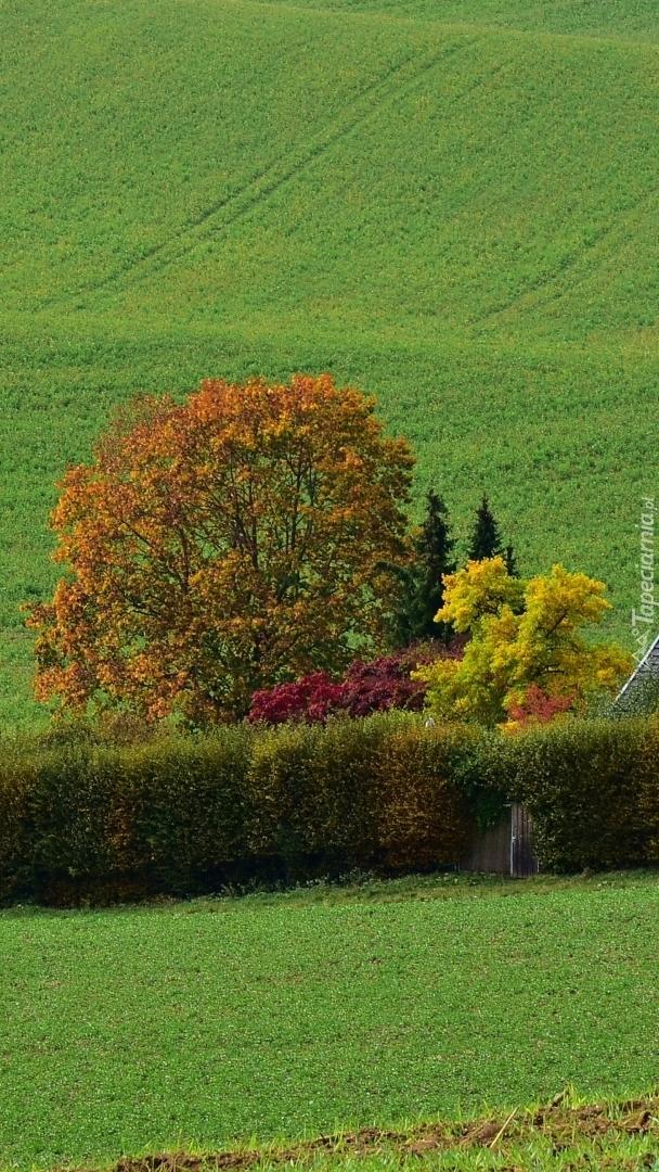 Jesienne drzewa na polu